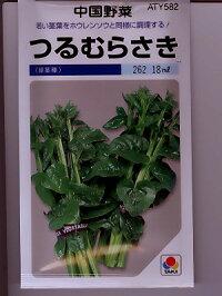 中国野菜タキイ・・・つるむらさき・・・<種のことならお任せグリーンデポ>