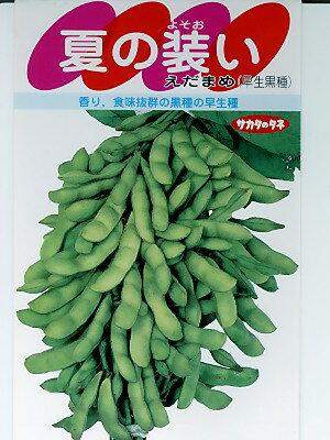 枝豆種 夏の装い