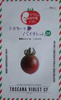 トスカーナバイオレットCFパイオニアエコサイエンスのミニトマト品種種100粒入り