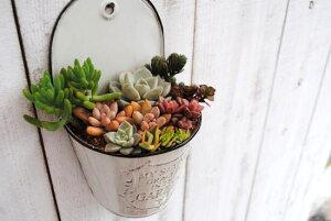 【多肉植物】【母の日】【サボテン】【ギフト】かわいい寄せ植え!ナチュラルでシンプルに飾れ...