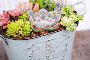 【多肉植物】【サボテン】【ギフト】かわいい寄せ植え!ナチュラルでシンプルに飾れ、インドア...