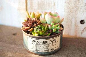 多肉植物寄せ植えペイント缶(S)【LA-CC】当店オリジナル