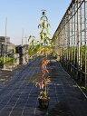 常緑ヤマボウシ 1.2m15cmポット 8本セット【1年間枯れ保証】【春に花が咲く木】