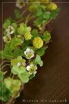クローバーモチーフガーランド♪クローバーの葉が可愛いです人工観葉植物、フェイクグリーンと造花専門店ナチュラルスタイルのインテリアにいかがですか「杜の都仙台からお届け」