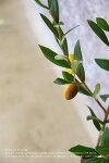 オリーブの素材全長90cm【造花】【人工観葉植物】【インテリアグリーン】【フェイクグリーン】【光触媒】【キッチン雑貨】【ナチュラル雑貨】