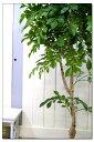 人工樹木 人工観葉植物の製作工房より出荷です。アートグリーン&フラワー、インテリアグリー...