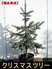 もっとも高級なクリスマスツリー 【レビューを書いて送料無料】【現品発送】もみの木の王様プ...