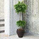 【屋外にも対応】人工観葉植物・全高2.1m・ベンジャミンG・トピアリー...