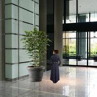 【人工植物】全高2.6m・大型ベンジャミン・ワイド・ロング(フェイクグリーン/インドアグリーン/造花・観葉植物/人工樹木/人工観葉植物)