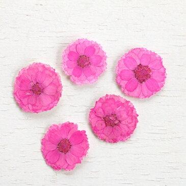 【押し花】5枚 エゾノコギリソウ  《ネオンピンク》【花 はな フラワー ドライフラワー flower ドライフラワー 桃色 ももいろ マーガレット さくら サクラ 桜 ビーズアンドパーツ アクセサリーパーツ】