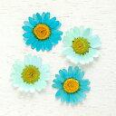 【押し花】4枚 ノースポール 《グラデーションブルー》[花 はな フラワー ドライフラワー flow...