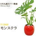 【送料無料】モンステラ(6号/約60cm)モンステラ丸鉢カバー陶器(白色・赤色)人気のある育てやすい観葉植物【送料込/インテリア/鉢/おすすめ/安い/おしゃれ/激安/ギフト】