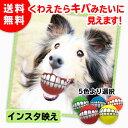 犬用 壊れにくく不規則な動きが楽しいオモチャ エッグ【イエロー】【送料無料】