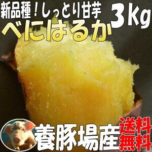 """【養豚場】が""""さつま芋""""を栽培&販売しているのは【当店だけ】しっとり甘芋☆2箱で1kgサービス..."""