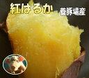 豊作SALE【2kg増量】5kg→7kg!2箱まで送料同一☆蜜芋!しっとり甘いも訳あり紅はるか7kg(べにはるか)養豚場が良質な堆肥をふんだに使用し栽培したさつまいも☆千葉県産訳ありさつま芋7キロ(土付)焼き芋(焼いも)やき芋にオススメ!