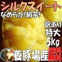 豊作SALE【2kg増量】5kg→7kg訳あり特大サイズシルクスイート送料無料☆えっ!?養豚場がさつまいも?甘くなめらかな食感(絹芋)サツマイモ7kg(土付)千葉県産 料理お菓子作り(焼き芋 焼いも)に【薩摩芋】さつま芋やき芋やきいも