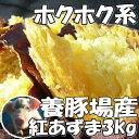 新さつまいも3kg豚が育てた紅東レビュー3400件サツマイモ...