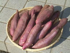 3箱まで送料同一!新さつまいも3kg豚が育てた紅東レビュー3500件サツマイモ紅あずまさつま芋薩摩芋