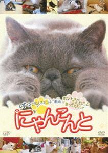 【27%OFF】[DVD] にゃんこんと~くすっと笑えるネコネコ動画 ホントはこんなこと言ってたりして~