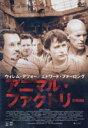 アニマル・ファクトリー(DVD) ◆20%OFF!