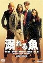 溺れる魚(DVD) ◆20%OFF!