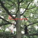 Kiroro / 長い間 キロロの森(スペシャルプライス盤) [CD]