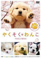 やくそくわんこ(DVD) ◆20%OFF!