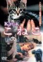 こねこ(DVD) ◆20%OFF!