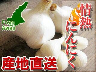 ■【送料無料】淡路島産ジャンボニンニク『情熱にんにく』兵庫県認証食品3kg