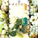【300本限定】山形県産 葡萄 ナイアガラ 100%辛口白ワ...