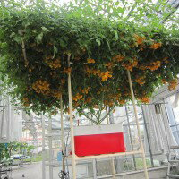 協和の水耕栽培キットホームハイポニカSarah(サラ)レッド