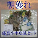 海の近くでしか食べられない美味さ。能登半島 小木の烏賊 【美味い いか 美味しい いか ...