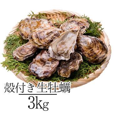 殻付き生牡蠣 岡山県 瀬戸内産  約3kg お歳暮 ギフト 送料無料 牡蠣 かき カキ