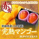 完熟マンゴー 宮崎県産 赤秀 2Lサイズ 350g以上×2玉 お中元 ギフト 送料無料...