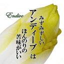アンディーブ チコリ 1パック おしゃれ野菜 珍しい野菜 インスタ映え サラダ お取り寄せ