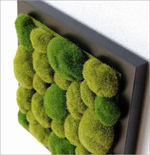 光触媒の観葉植物