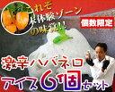どこを探してもない新ジャンル!【激辛スイーツ】☆激辛ハバネロのアイスクリーム6個セット<冷...