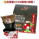 京都ハバネロの里おしのちゃんハバネロが手軽に栽培できる!おしのちゃんハバネロ栽培セット