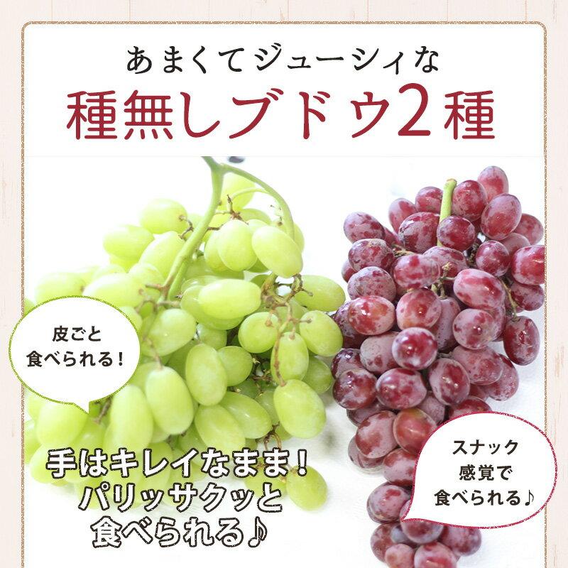 チリ産ブドウ2キロフルーツギフトぶどうセット送料無料