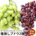 チリ産 ブドウ 2キロフルーツ ギフト