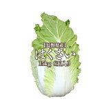 【産地応援クーポン対象商品☆】【長野県産】白菜 6玉入り 15kg 1玉2.5kg 送料無料 はくさい ハクサイ hakusai