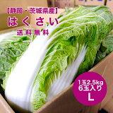 【茨城県産】白菜 6玉入り 15kg 1玉2.5kg 送料無料