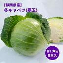 【静岡県産】寒玉キャベツ 10kg 8玉入り 送料無料 寒玉
