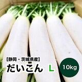 【青森県産】大根 10kg 10入れ Lサイズ 送料無料 だいこん ダイコン ラデッシュ すずしろ 春の七草 根菜