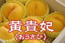 「黄貴妃」おうきひ 黄色い桃です♪5kg 約12玉〜約20玉  【山形・山梨・長野・その他産地】