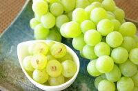 完熟ナイアガラ葡萄通販芳醇な香りの山形ぶどうを販売。約2kg5〜9房山形産