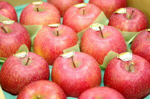 飛馬(ひうま)ふじりんご取寄販売 青森県弘前市相馬村産の糖度14度お歳暮サンふじりんごを通販で。約5kg 約14玉~約18玉