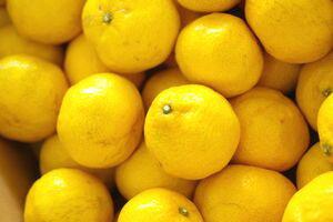 黄金柑(おうごんかん)通信販売 爽やかな香りが特徴のゴールデンオレンジを販売取寄。中箱 約3kg 約30玉〜60玉 静岡・他産地