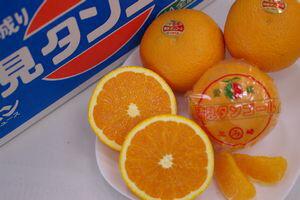 三崎共選『清見オレンジ』(清見タンゴール)