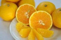 【ひめのつき】柑橘王国愛媛のニューフェイス!約5kg【愛媛県産】